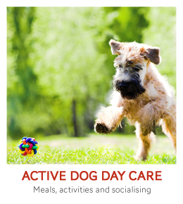 Dog Day Care Teneriffe